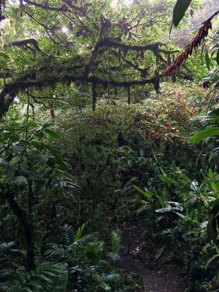 Cloud Forest Trees